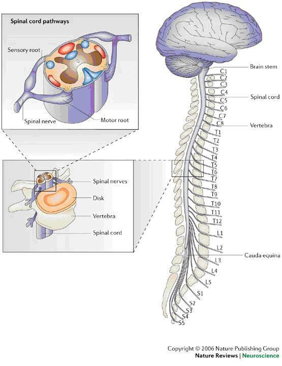 Anatomy Of The Brain And Spinal Cord Seattle Cancer Care Alliance